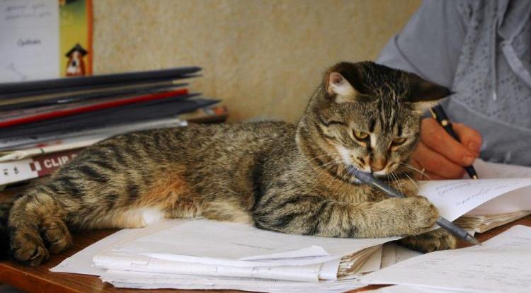 Котёнкин дневник