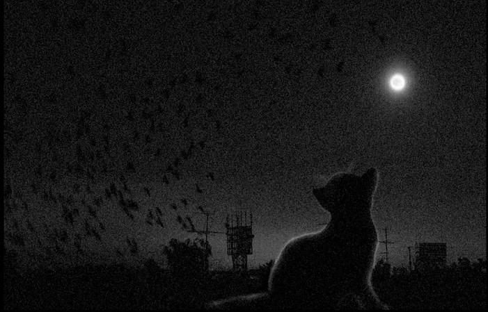 Девять жизней одной кошки
