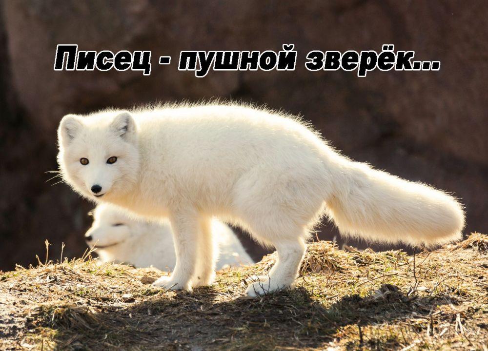 Гороскоп... (by Полёт Разборов)