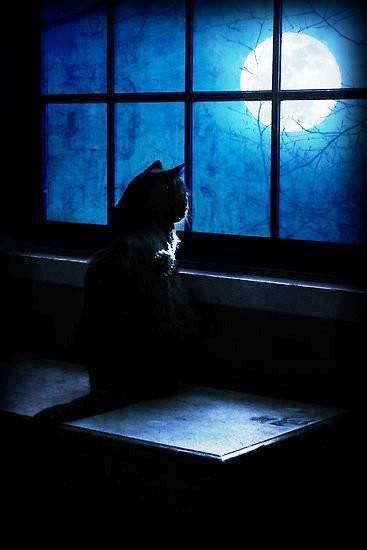 О луне и кошке