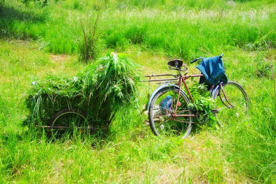 Под запах свежескошенной травы...