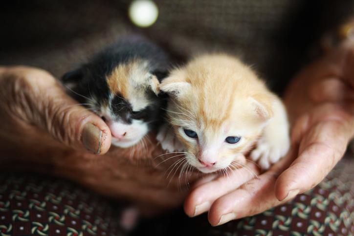 Старушка и котята