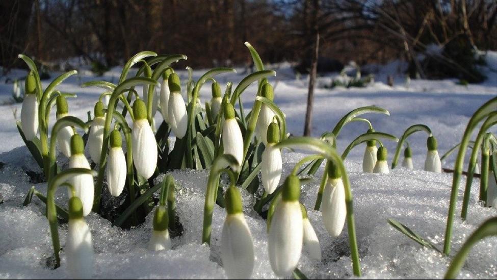 О последних днях Зимы... В марте.
